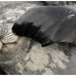 SealScratching