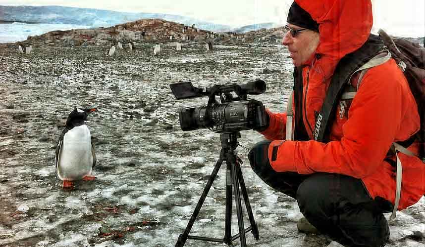 Sailing antarctica | pictures of penguins